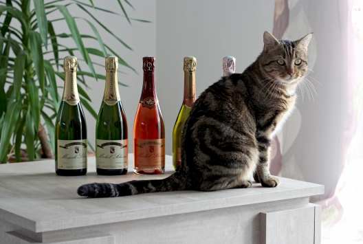 Gamme chat