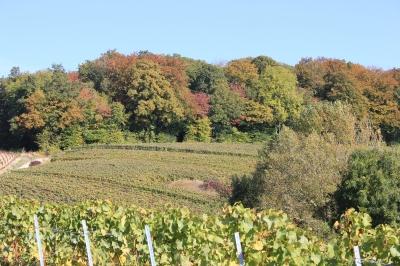 Vignes & Forêt.